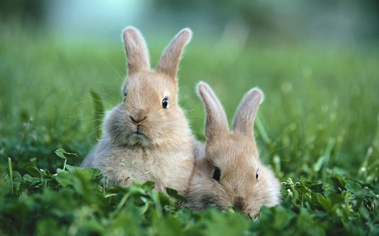 兔兔这么可爱,怎么能吃兔兔呢? 红烧最香了~