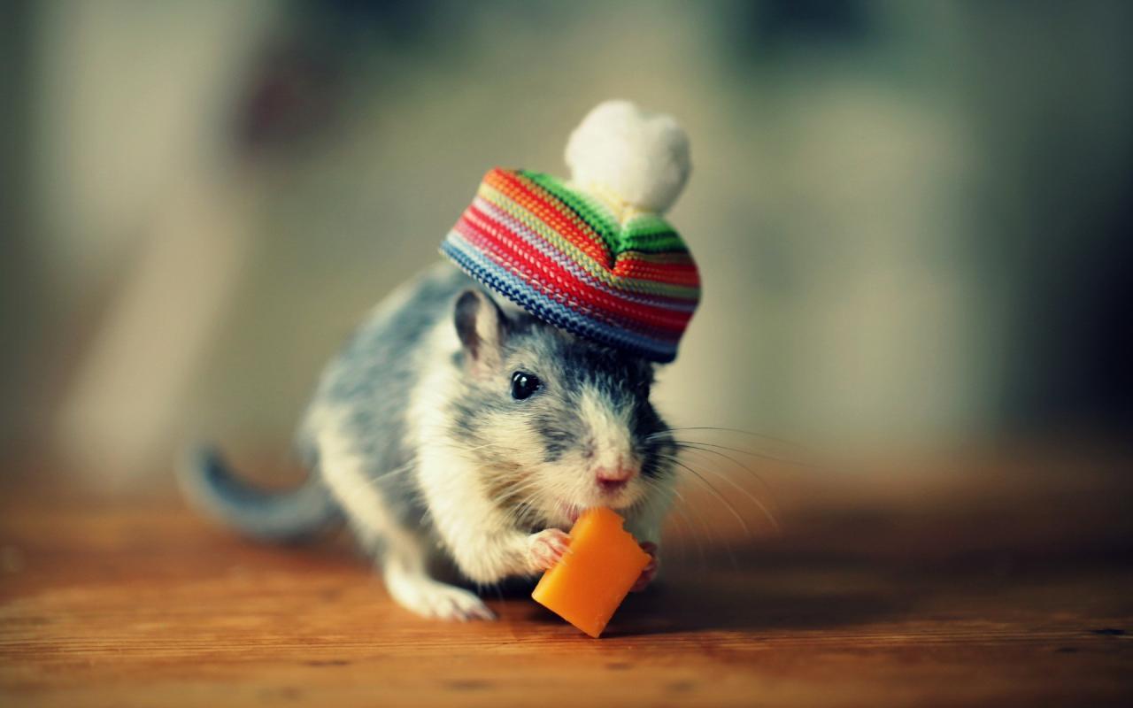 """贼眉鼠眼、人类最讨厌的东西""""老鼠""""-觅爱图"""